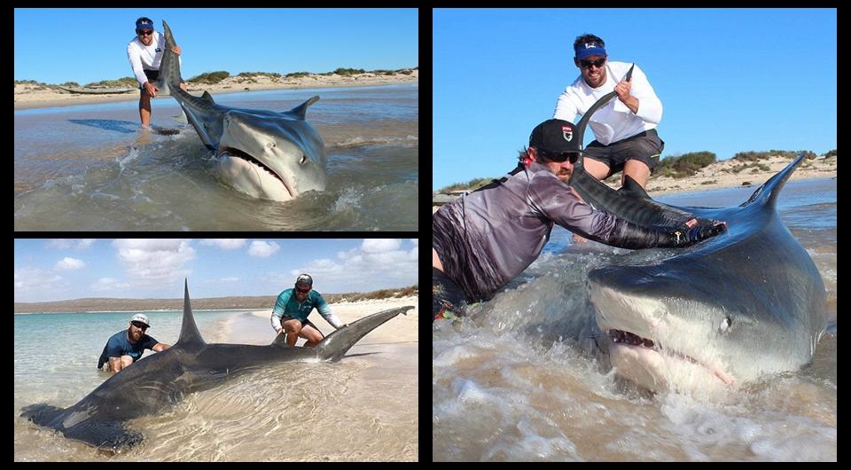 Fotos de dos hombres australianos con tiburones