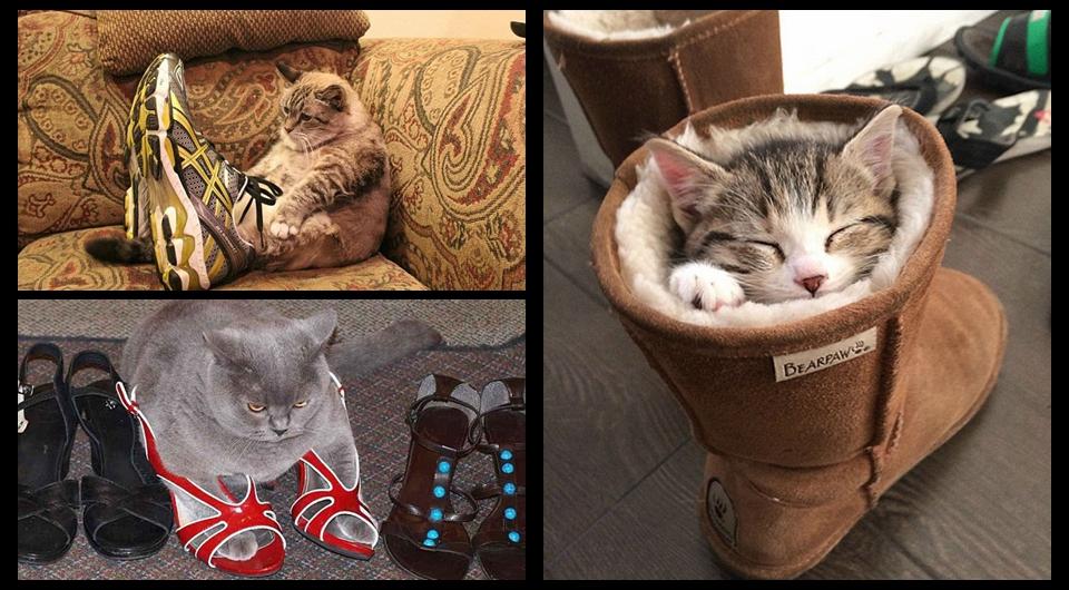 A los gatos les gustan los zapatos