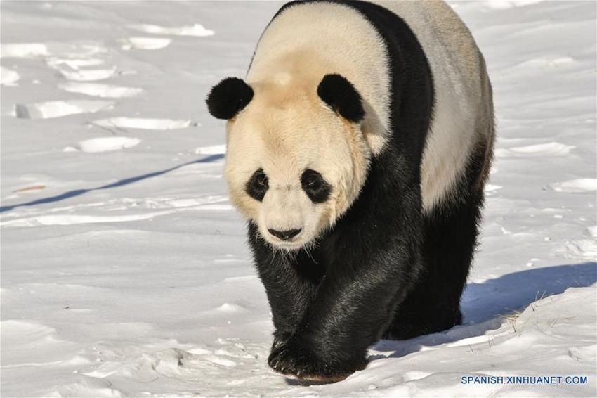 how to write pandas dataframe to excel