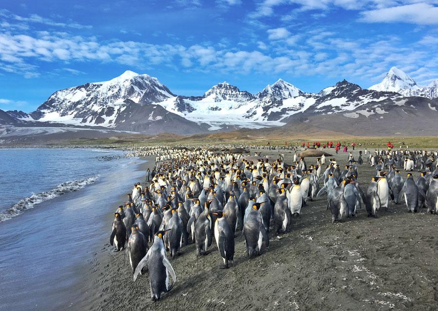Más que la Antártida: un viaje fantástico