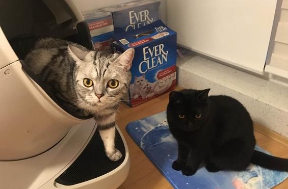 Mi año con mis mascotas: Vivienne y sus dos gatos