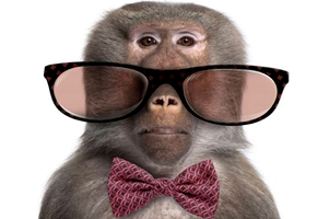 Otra similitud entre monos y seres humanos