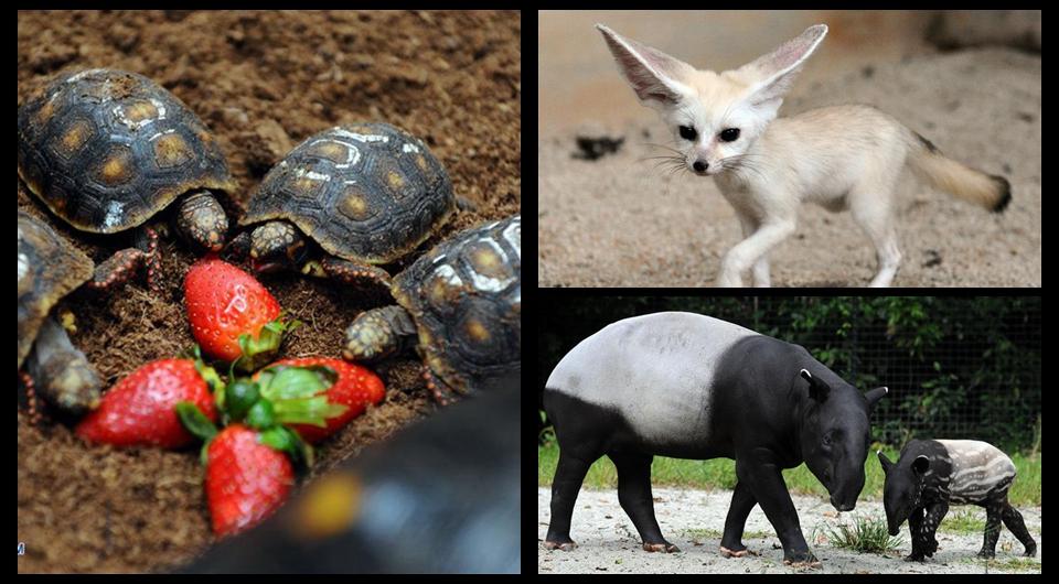 Animales en Zoológico de Singapur