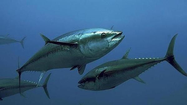 El mercurio del pescado podría aumentar el riesgo de ELA