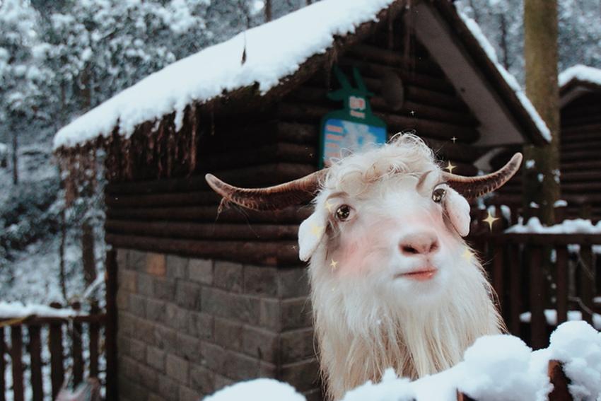 Super lindo: adorables animales a través de la lente especial1