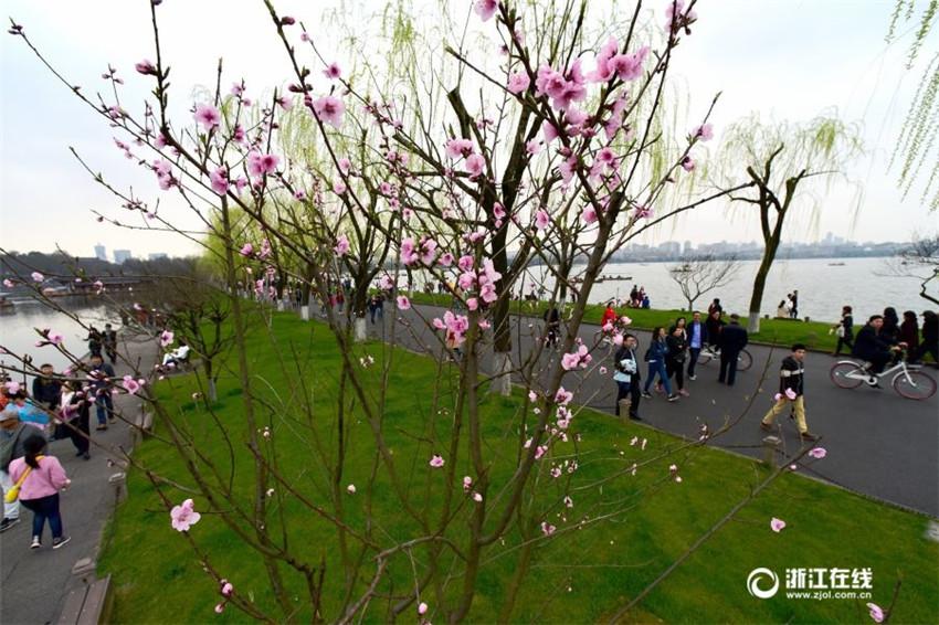 La primavera llega al Lago de Oeste de Hangzhou
