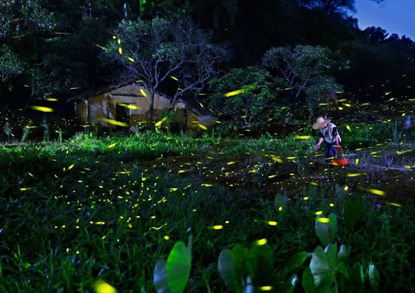 Las mejores imágenes del concurso Sony Photography Awards3