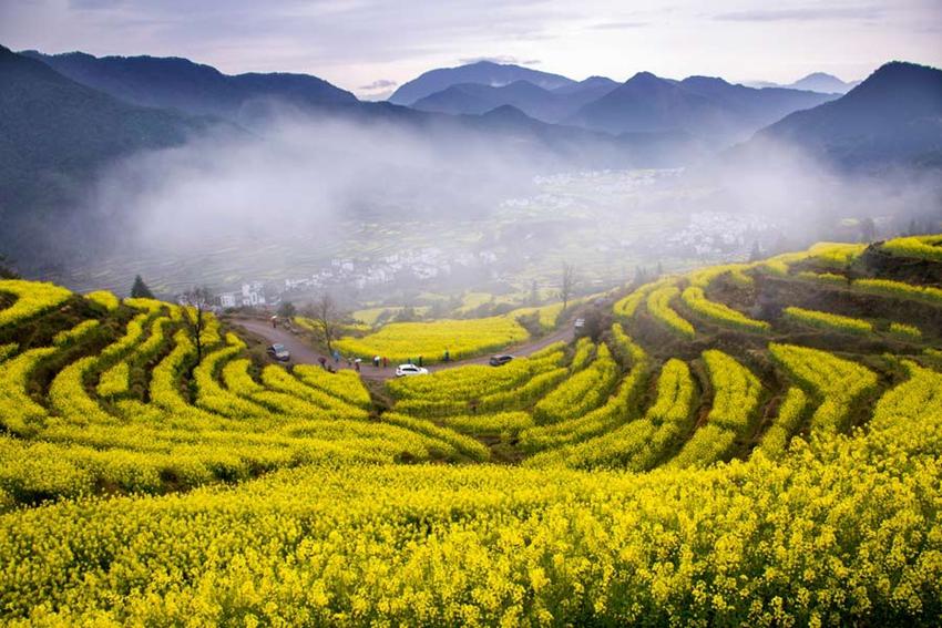 Los 10 mejores lugares para disfrutar de la canola en China1