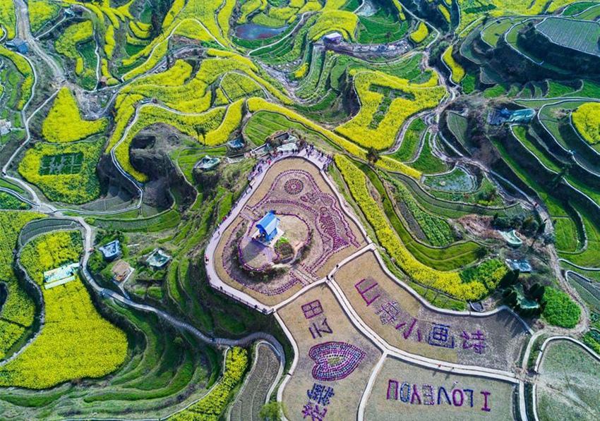 Zhejiang: flores de col en campo de terraza sobre montaña