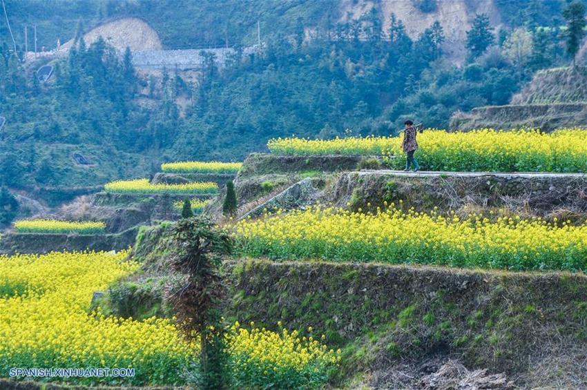 Zhejiang Flores De Col En Campo De Terraza Sobre