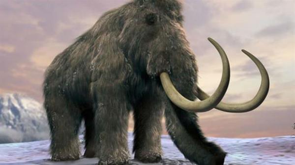 Descubren que los mamuts sufrían los mismos problemas de huesos que los humanos