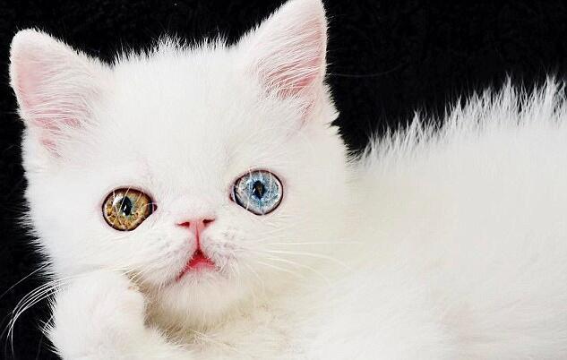 Pam Pam, el gato que ha ganado 74 mil fans en Instagram con sus preciosos ojos