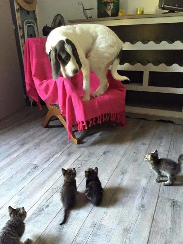Díos mío, ¡Qué horribles son estas cosas para nosotros perros!