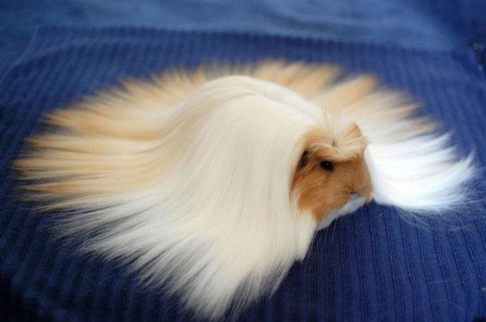 El peinado más majestuoso