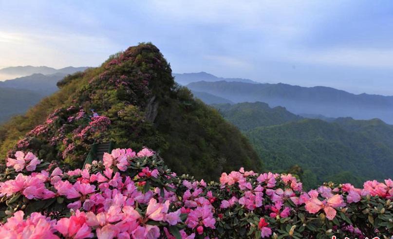 Azaleas florecen en Sichuan