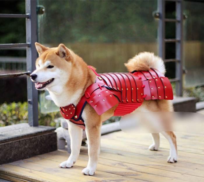 Esta compañía japonesa fabrica armaduras de samurai para perros y gatos