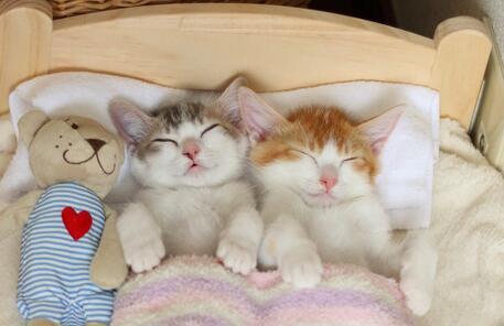 Momentos cariñosos de Canele y Amelie, dos gatos hermanos