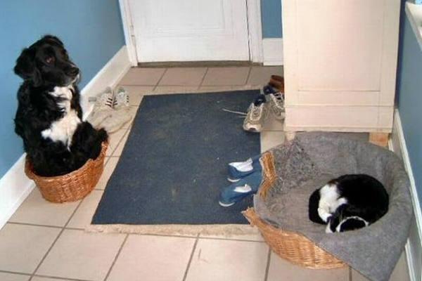 11 fotos de gatos 'gandallas' con perros