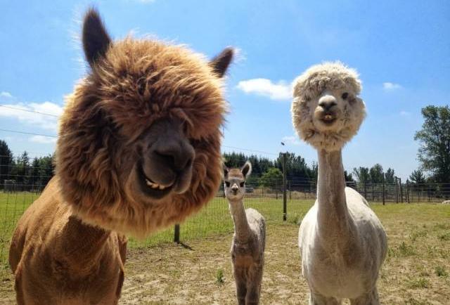 Fotos divertidas de los animales