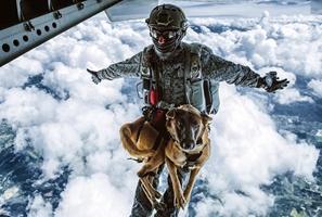 Siara el perro paracaidista que se gradúa en la Fuerza Aérea