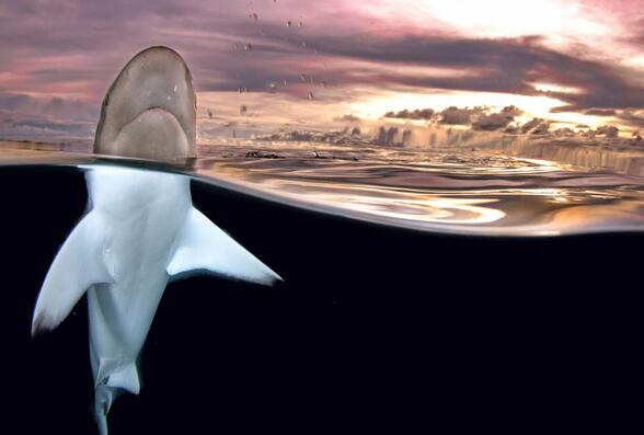 La otra cara de tiburones debajo del agua