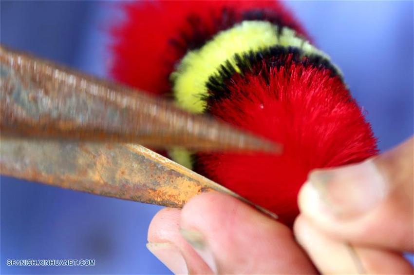 Patrimonio cultural intangible: ave de terciopelo