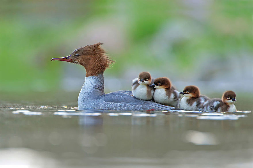 Las mejores fotos de aves de 2017