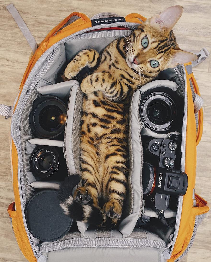 Conoceremos a Suki, el gato viajero que vive una vida envidiable
