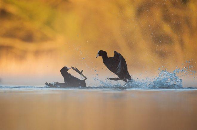 En imágenes: Fotógrafo de aves del año