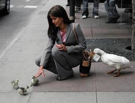 Divertidos animales se ven robando 2