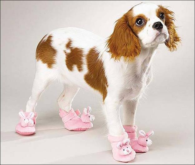Fotos chistosas de las mascotas que llevan zapatos