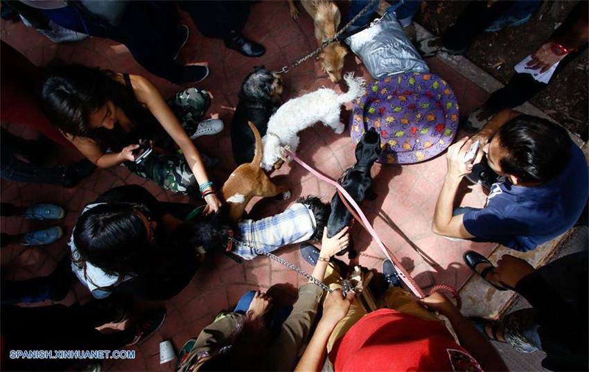 Refugio temporal para mascotas extraviadas a raíz del sismo en la Ciudad de México