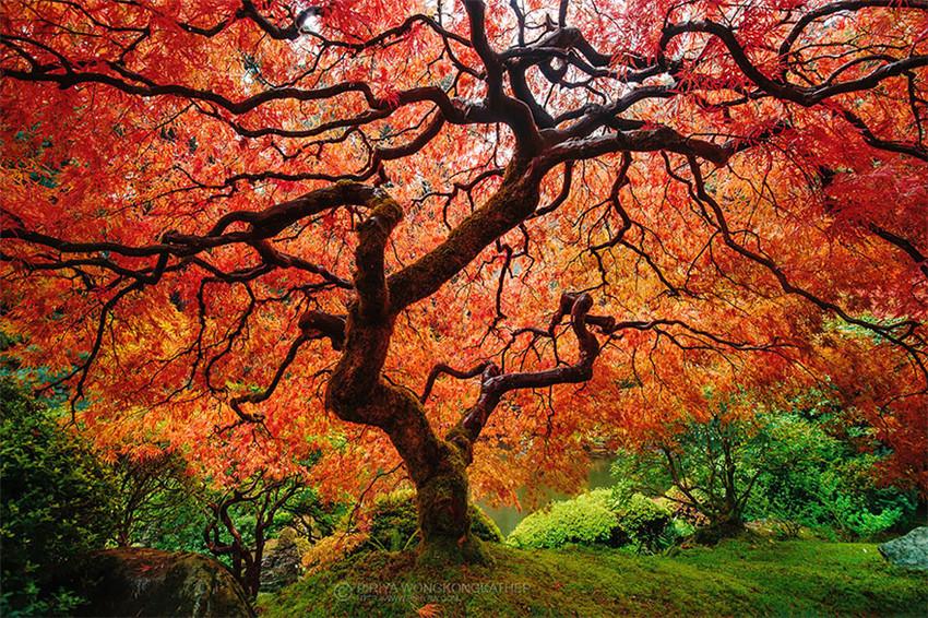 12 Fotos de antes y después de las bellas transformaciones que causa el otoño