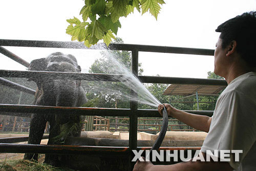 An elephant gets a cold shower at the Jinan Zoo in Jinan, Shandong Province on Sunday, June 22, 2008. The zoo tried to keep its animals cool as the temperature hit 37.2 degrees Celsius (98.9 degrees Fahrenheit).