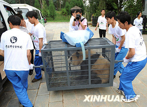 Eight giant pandas were evacuated from a breeding base in southwest China's Sichuan Province Thursday to avoid threats from possible geological disasters after the devastating May 12 earthquake.