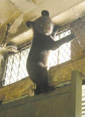 动物园里,小黑熊爬得老高