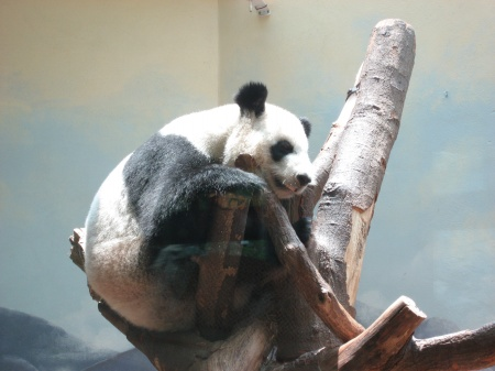 A file photo of giant panda Lun Lun