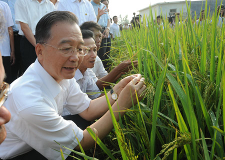 Chinese Premier Wen Jiabao examines the growth of paddy at Gaosha Village in the Qinnan District of Qinzhou City, southwest China's Guangxi Zhuang Autonomous Region, Oct. 5, 2008. Wen made an inspection tour in Guangxi on Oct. 4-5. [Xinhua]