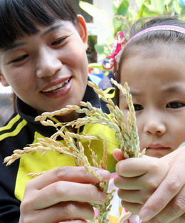 A girl observes rice ears with her teacher in a kindergarten in Suzhou, Jiangsu province, October 15 2008, as part of lessons to teach children to cherish food. [China Daily]