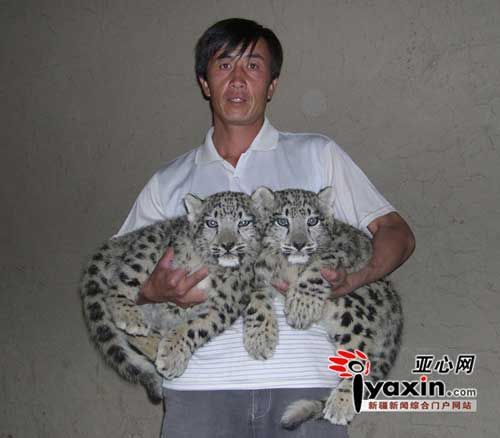 The photo shows two snow leopard raised by Zhang Peiwei, a herdman in the Xinjiang Uygur Autonomous Region.