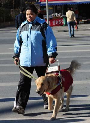 China S Domestically Trained Guide Dogs Graduate China