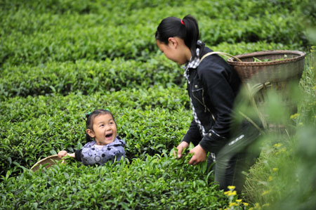A girl helps her sister pluck tea leaves at a tea garden in Enshi, central China's Hubei Province, April 26, 2009.[Photo: Xinhua]