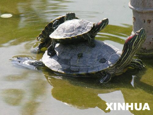 File photo: Red-eared slider