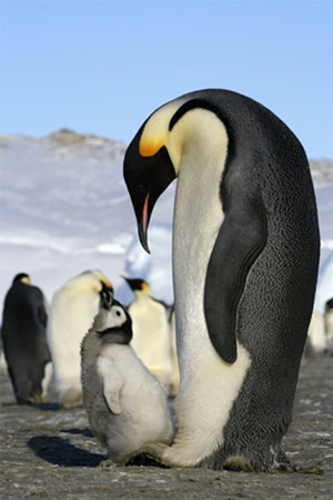 British Scientists Map Antarctic Penguins From Space