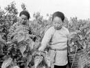 Memoir of Jiang Village