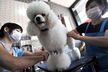 Workers clip a pet dog in a pet beauty shop in Wuhan, capital of central China's Hubei Province, July 11, 2009. Many people have their pets clipped to spend the hot summer in Wuhan. [Zhou Chao/Xinhua]