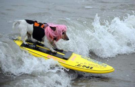 These are not your usual four legged friends, these are surf dogs. [CCTV]