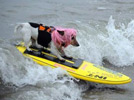 Brave surf dogs hit waves in California