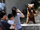 Brown bear gives tourists great fun