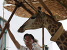 Giraffe receives treatment at Hefei Wildlife Park